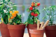 マンション野菜生活