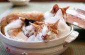 猫鍋闘病記録