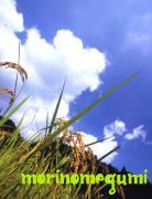 農と衣・食・住の生活 モリノメグミのブログ