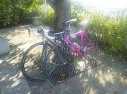 Pinkoとポタる〜自転車グルメ日記