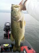 Big Bass Getter