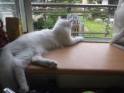 かぼ と ぐり の犬猫共同生活日記