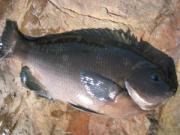 爆釣りマニア -海/川/湖 釣り動画まとめブログ-