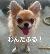 今日のわんこ動画「わんだふる!」|犬動画サイト