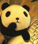 パンダとポタリング♪