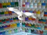 Rainbowwings 七色の翼で自由に行こう!
