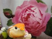 present from garden