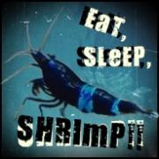 ж海老龍ж  EAT,SLEEP,SHRIMP!