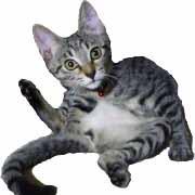 うちのねこども!ノラ猫時々保護ところによりうち猫