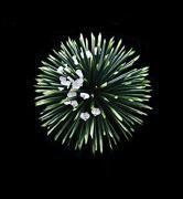 世界一の花屋計画 しがない花屋のブログ