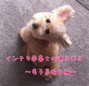 インチキ栄養士の適当弁当 〜男子高校生編〜