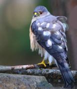 Take−Maの野鳥観察日記(猛禽主体)