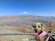 旅犬さくらの日常