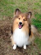 Dog index Makikoさんのプロフィール