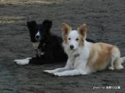 湖畔の愛犬生活