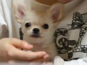 berrytamaちゃんさんのプロフィール