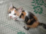 阿頼耶識瞑想と面白動画多趣味と猫!