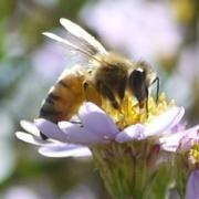 小森養蜂場のみつばち日記