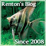 Renton's AquariumBlog