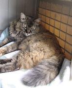 ベランダで暮らした猫