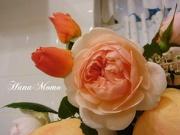 花桃の脱線ブログ