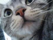 猫好きちゃっぴさんのプロフィール