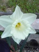 季節の花の切り花と園芸記録