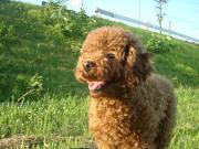 犬の置物ブログ