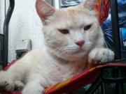 街で見かけた猫ブログ