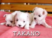 愛犬ハウス*タカノ