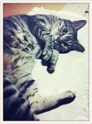 猫と私のおひるね日記