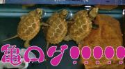 亀ログ!!!!!!!