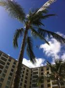 ハワイで発達障害とシュタイナー教育を考える