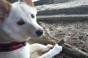 愛犬モモの成長日記♪