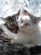 毎日たっぷり  猫まみれ2