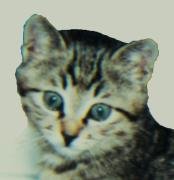 ぷんたの猫語り