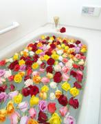 Asian Rose.上海のつぶやき日記