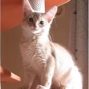 ニャンたって猫が好き