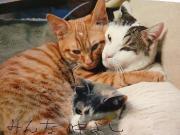 保護猫カフェ「WISH」里親会