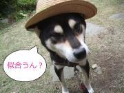 ☆わんこ大好きっ娘!の爆笑(犬)日記
