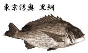東京湾奥黒鯛ヘチ釣り