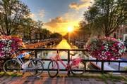 オランダで起業 Tomomoの日常生活