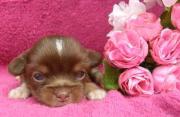 puppys-room