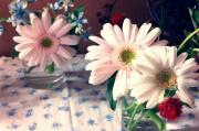 flower&garden daisy