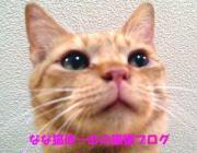 なな猫ほーむの東京猫猫日記