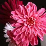 colors in bloom