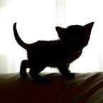子猫ちゃろのニャアニャア日記