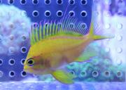 ペットバルーン 海水魚・サンゴブログ