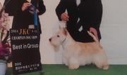 愛犬達の愉快なblog
