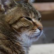 猫がつぶやく猫川柳